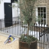 Cast Iron Railings Installed In Northumberland Place, London W2